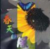 春天的風(台語)